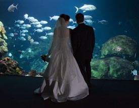 Aquarium Weddings