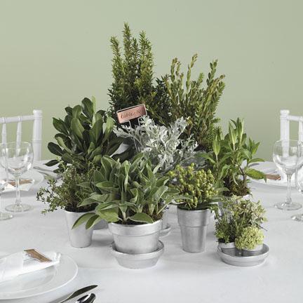 Herb Centrepieces!